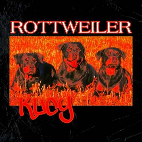 KUCY Yeni Rottweiler Şarkısını İndir