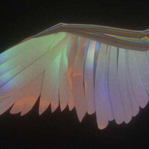 Venus88 Yeni Wings Full Albüm İndir